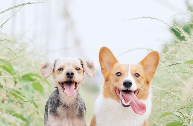 Preventing Home Dog Fights in Aledo